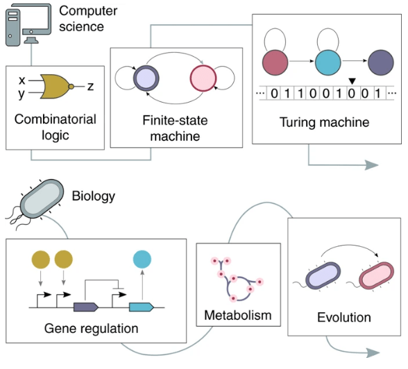 Pathways to cellular supremacy in biocomputing, a perspective